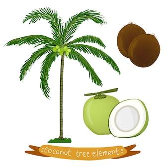 Tropische kokosnuss-palme