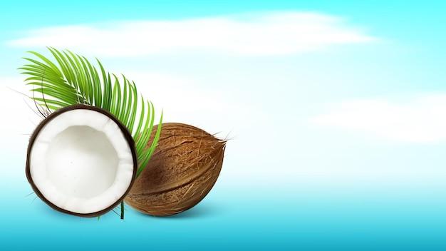 Tropische kokosnuss und palmzweig kopieren raum vektor. ganze und beschädigte frische kokosnuss und exotische baumgrünblätter. rissige lokale vitamin-kokos-nuss-vorlage realistische 3d-illustration