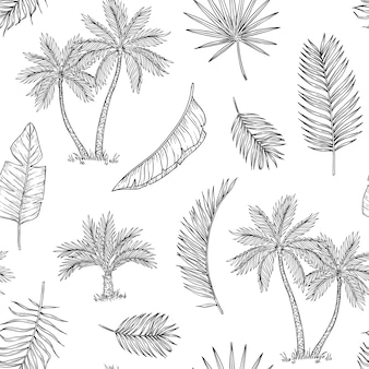 Tropische kokospalme, exotische insel