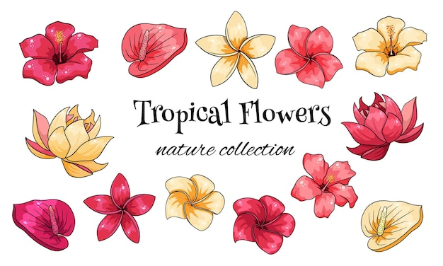 Tropische kollektion mit exotischen blumen im cartoon-stil. vektorillustration für das design lokalisiert auf weißem hintergrund.