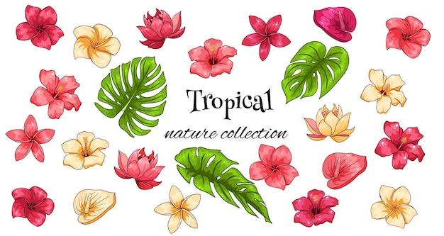 Tropische kollektion mit exotischen blumen und geschnitzten blättern im cartoon-stil. vektorillustration für das design lokalisiert auf weißem hintergrund.