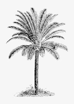 Tropische palme