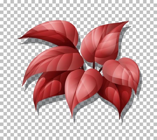 Tropische pflanze auf transparentem hintergrund