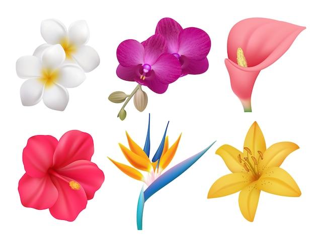 Tropische pflanzen. blätter und exotische blumenstrauß botanische natur sammlung von realistischen blumen