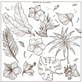 Tropische pflanzen und exotische blumen skizzieren vektor lokalisierte eingestellte sammlung der ikonen