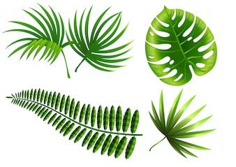 Tropische Pflanzenblätter eingestellt. Monstera, Farn, Palme, Yucca.