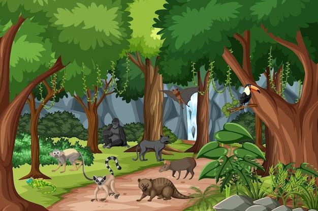Tropische regenwaldszene mit verschiedenen wilden tieren Kostenlosen Vektoren