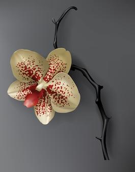 Tropische schwarz-, rot- und goldorchideenblume auf dunkelheit