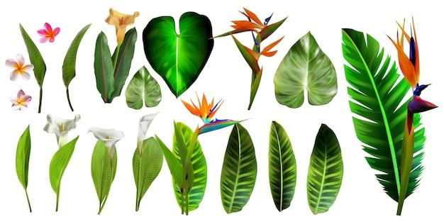 Tropische vektorblumen. karte mit blumenillustration. blumenstrauß von blumen mit dem exotischen blatt getrennt