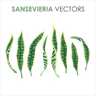 Tropischer exotischer sansevieria-baum hinterlässt flache illustrationen für den sommer