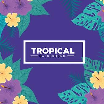 Tropischer hintergrund, gelbe und violette farbe des hibiskus, mit zweigen und blattpflanzen