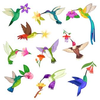 Tropischer kolibri-kolibricharakter des kolibris mit schönen birdie-flügeln auf exotischen blumen in der natur-wildtier-illustrationsmenge des fliegenden kolibris im tropen auf weißem hintergrund