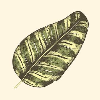 Tropischer palmenurlaub, dschungel, blätter