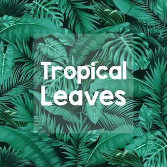 Tropischer waldhintergrund