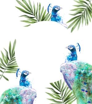 Tropisches hintergrundaquarell des pfaus. sommer exotische karte