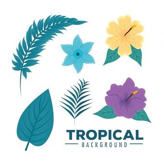 Tropisches set mit zweigen, blättern, blüten und hibiskus