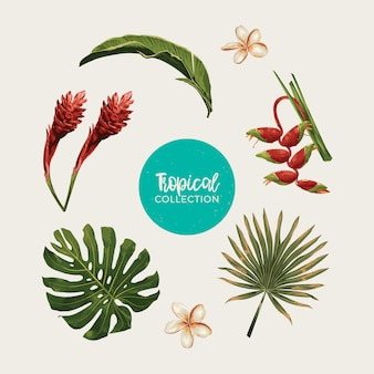 Tropisches themenorientiertes clipart-set