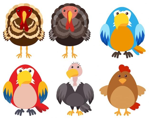 Truthähne und verschiedene arten von vögeln