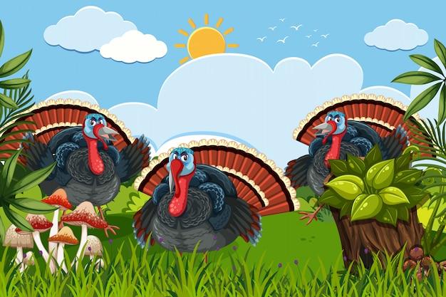 Türkei in naure szene