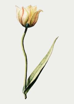 Tulpe im vintage-stil
