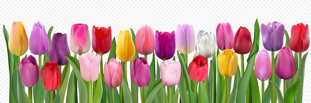 Tulpen mit blättern isoliert