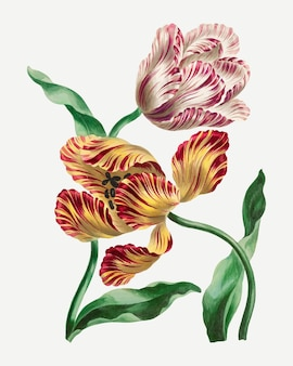 Tulpen-vektor-vintage-blumen-kunstdruck, remixed von kunstwerken von john edwards