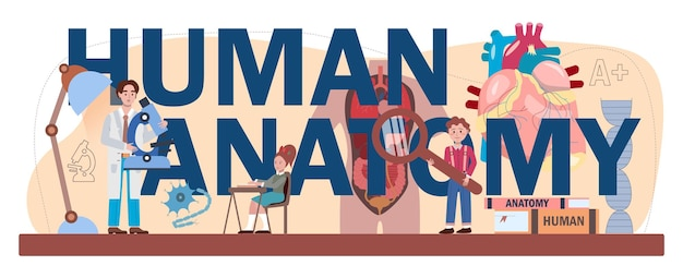 Typografische kopfzeile der menschlichen anatomie. studium der inneren menschlichen organe. schulfach anatomie und biologie. menschliche körpersysteme. isolierte flache vektorillustration