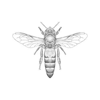 Übergeben sie gezogene illustration der brummenbiene alias hummel