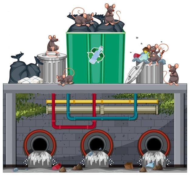 Unhygienische müllentsorgung mit ratte