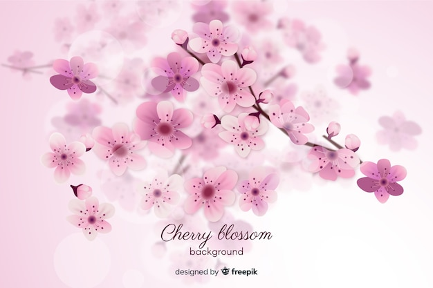 Unscharfer kirschblütenhintergrund