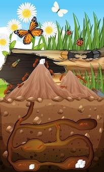 Unterirdischer tierbau mit ameisenfamilie