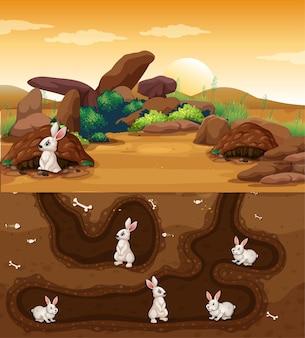 Unterirdisches tierloch mit vielen kaninchen