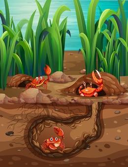 Unterirdisches tierloch mit vielen krabben