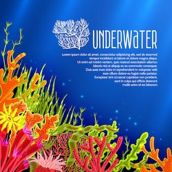 Unterwasserkorallen poster