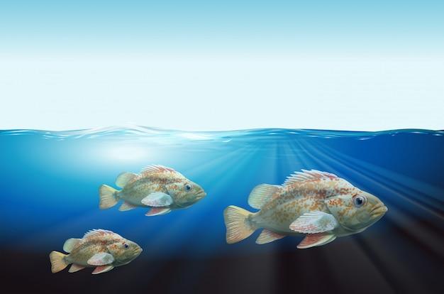 Unterwasserlandschaft mit drei fischen