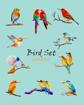 Ursprüngliche malerei des vogels gesetztes aquarell bunt vom vogel