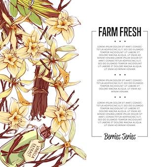 Vanille-gewürz-flyer mit platz für text