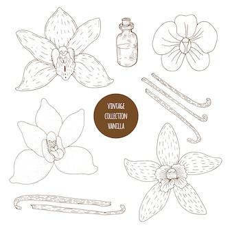 Vanille. gezeichneter satz des vektors hand kosmetische anlagen lokalisiert. komponentenillustration der ätherischen öle. aromatherapie zutaten. skizzensammlung natürliche florenelemente.