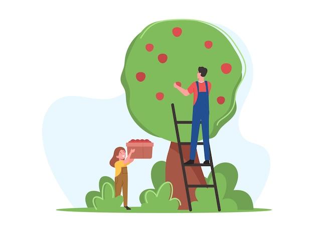 Vater und tochter der bauernfamilie pflücken die apfelernte in den obstgarten. gärtnerfiguren, die reife früchte ernten