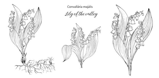 Vector blumenschwarzweiss-zusammensetzungen mit maiglöckchenblumen.