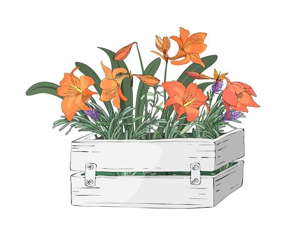 Vector gartenblumen in einem hölzernen weißen kasten des gartens
