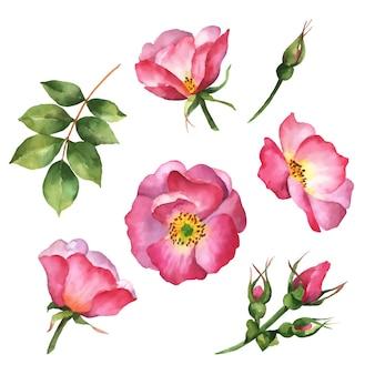 Vector hagebuttenblumen handgezeichnete illustration von wildrosen und blättern isoliert auf weiß