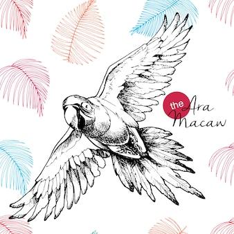 Vector hand gezeichnete illustration des ara macawpapageien