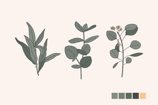 Vector illustratio sammlungsikonen von verschiedenen eukalyptuszweigen mit blättern. botanische gestaltungselemente.