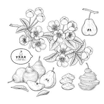 Vector sketch pear dekoratives set.