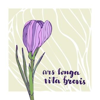 Vector weinlesegrußkarte mit krokusblume und -beschriftung. lateinischer text - ars longa vita brevis