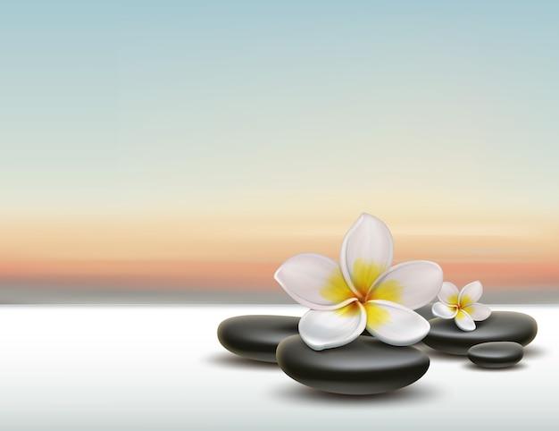 Vector weiße plumeria-blume mit schwarzen zen-spa-steinen auf sonnenuntergangshintergrund
