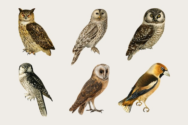 Vektor gemischte vögel und eulen handgezeichnetes set