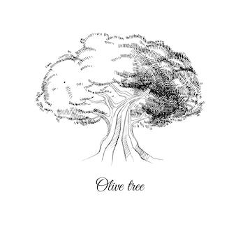 Vektor handgezeichnete skizze eines alten olivenbaums
