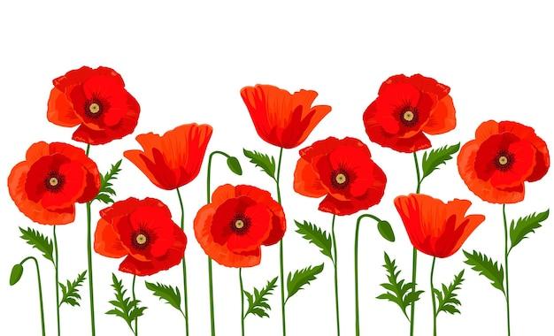 Vektor horizontaler hintergrund mit roten mohnblumen auf weißem hintergrund.